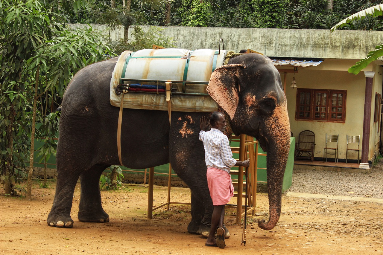 elephant-53e4d14a49_1280